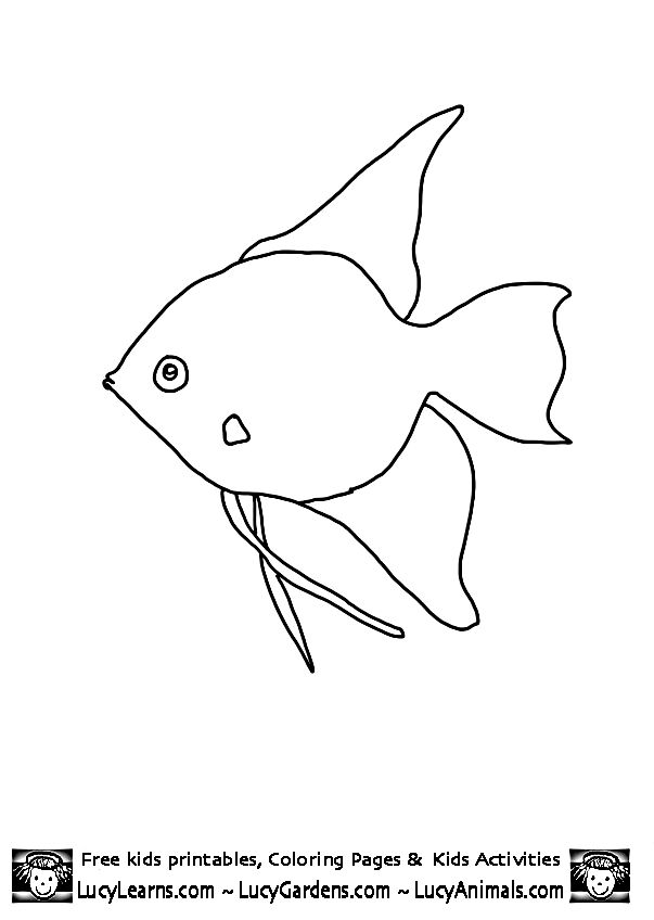 Fish Template | Angel Fish Coloring Page, Lucy Learns Print Out Coloring Pages of Fish ...