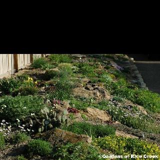 20 best images about kivikkoideoita rock garden ideas on for Landscaping rocks lodi ca