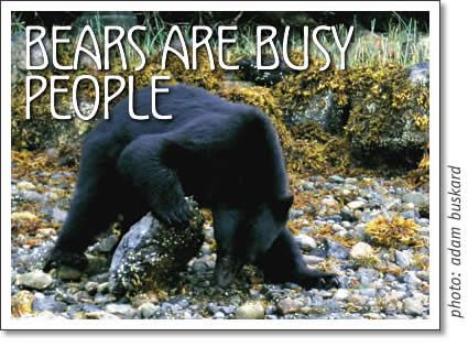 Bears are busy people
