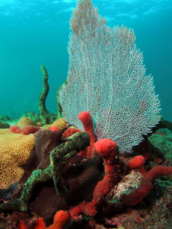 Beautiful+Coral+Reefs | Puerto Rico's World-Class Underwater Wonders