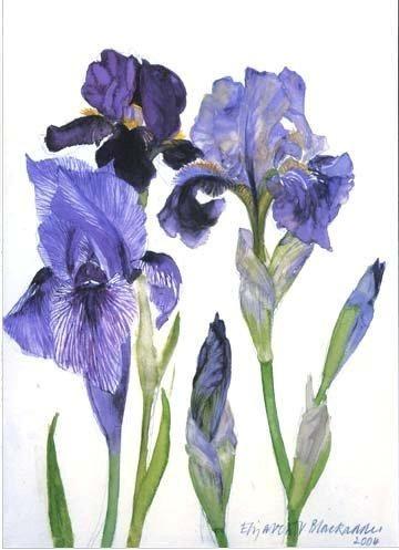 'Three Irises' by Dame Elizabeth Blackadder (eb4)