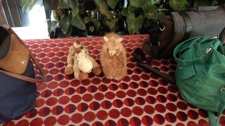 My camel made friends too :) Llama