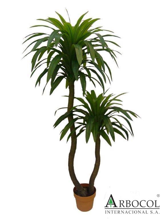 Arbusto Dracenea 18169  $245400    1.60 cms alto x 80 cms ancho