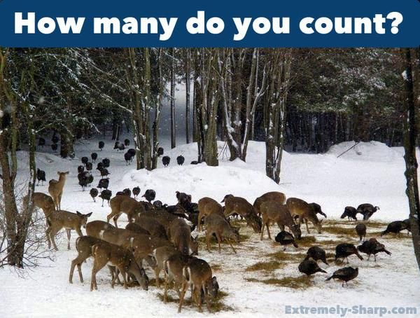Hunting Humor How many deers do you count