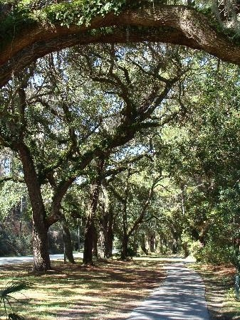 Jeckyll island. This was so beautiful with the Spanish moss! Everyone here also wear big hats and have tiny dogs!
