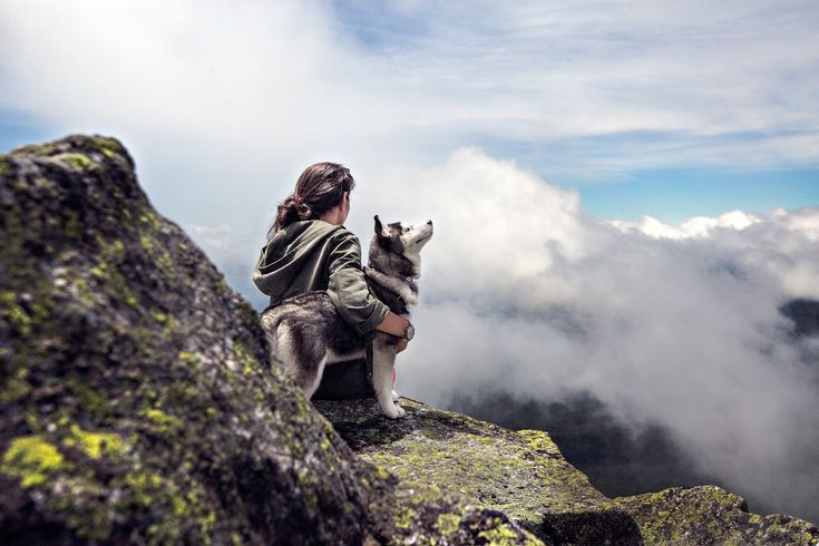 15 Reasons To Have A Dog - www.howsheknowsthat.com - inspiration , dogs, animals , pets , nature