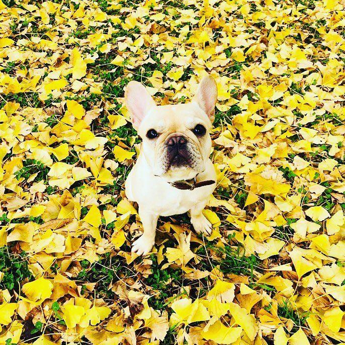 いいね!61.1千件、コメント1,797件 ― 香取慎吾さん(@katorishingo_official)のInstagramアカウント: 「くるちゅーばー #くるみ #草彅剛 #香取慎吾 #フレンチブルドッグ #犬 #dog #cute」