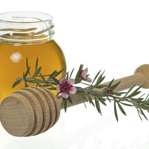 This traditional Maori medicinal plant is a powerful and versatile healer. Manuka (Leptospermum scoparium), or New Zealand tea tree, has a long history of use for treating many ailments, including fever, urinary infections, diarrhoea, and burns. Its two most important products are essential oil and honey. Both are strongly antibacterial, antifungal, antiseptic, antiviral, anti-inflammatory and antimicrobial.