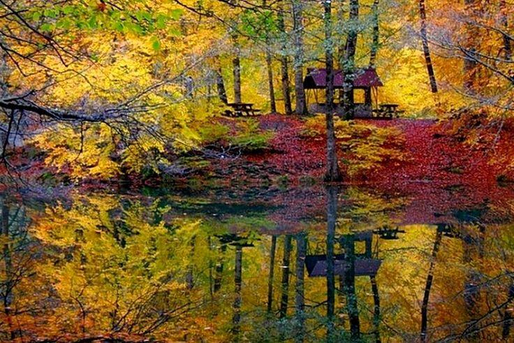Fall   v2 - Bolu, Bolu