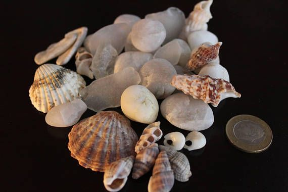 Hey, I found this really awesome Etsy listing at https://www.etsy.com/listing/533557188/sea-shell-mix-home-decorartsea-shellsea