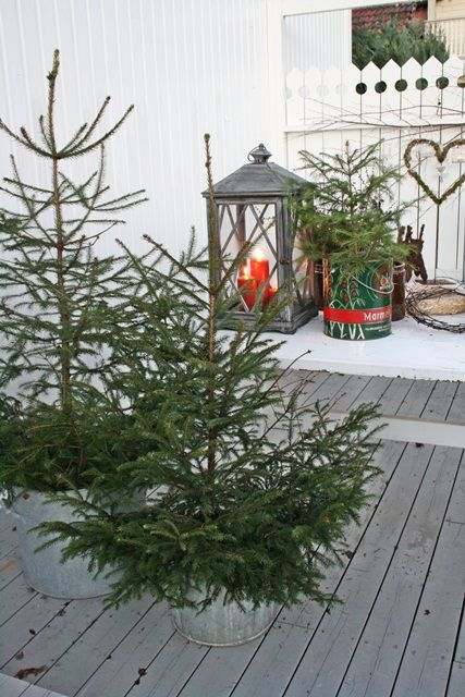 Love the pines in the galvanized pails!