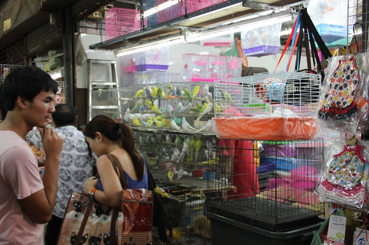 http://www.vietnamitasenmadrid.com/tailandia/mercado-chatuchak-bangkok-mercado-fin-de-semana.html Tiendas de animales en el Mercado de Chatuchak de Bangkok