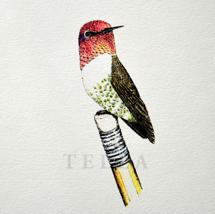 Kolibřík na tužce - v barvách, hummingbird