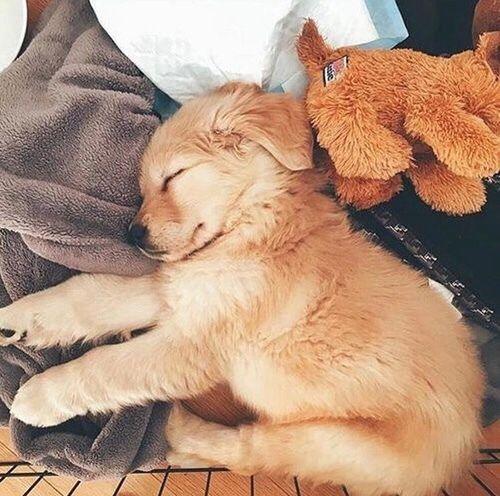 dog, cute, and animal kép