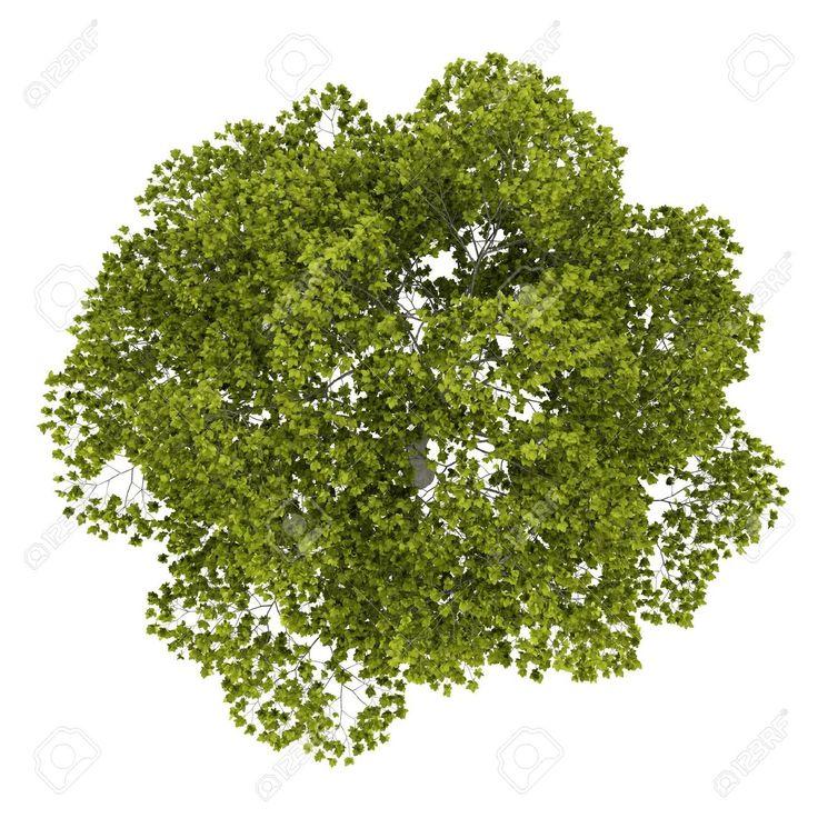 tree png plan free pictures, images tree png plan download free