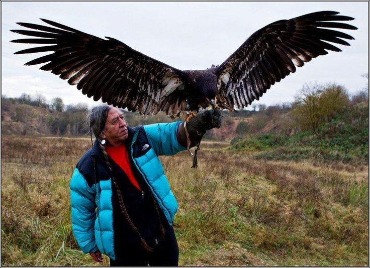 Golden Eagle...see the wingspan?? | GREAT AND GLORIOUS ...