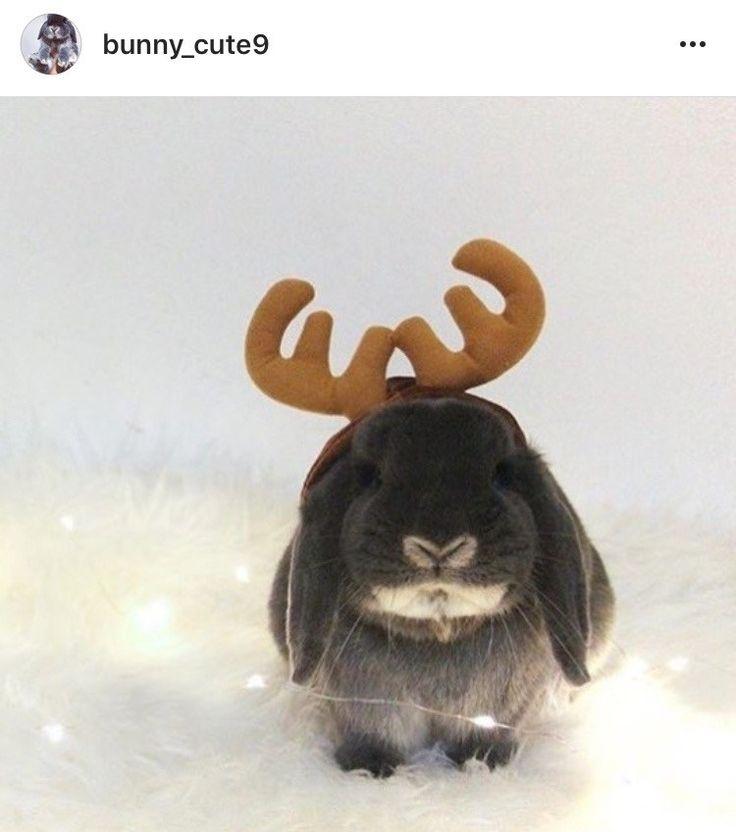 beautiful bunny in santa costume
