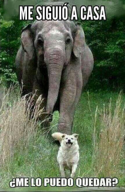 Resultado de imagen de animales graciosos