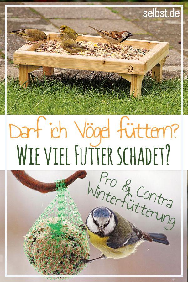 Winterfutterung Vogel Selbst De Vogel Im Winter Vogel Im Garten Kleine Tiere