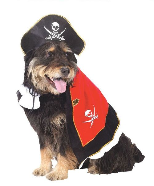 "Arrgh! Dog Pirate Costume - This adorable Bride dog costume is just want you need if you have two dogs getting married.  The Bride costume is a white satin gown. On the back there is a velcro closure. It cinches around the middle ""waist."" There is white lace around the collar and sleeve cuffs. A dog Bride can not be without her veil! It is long white tulle with sparkles. It has four beautiful pink flowers with little pearl like gems. #yyc #costume #pets #pirate"