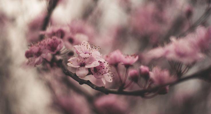 https://flic.kr/p/SfZ9TV   Another first blossoms