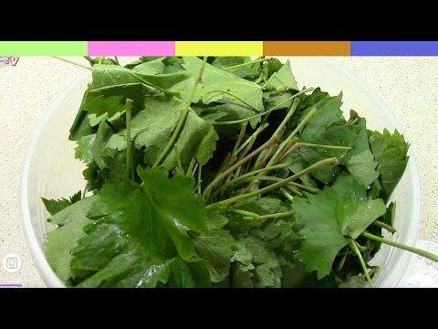 Asma Yaprağı Saklama Yöntemleri/SALAMURA VAKUM ve DONDURUCU da/ŞEFFAF MUTFAK - YouTube
