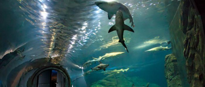 3. Adventure Aquarium, Camden