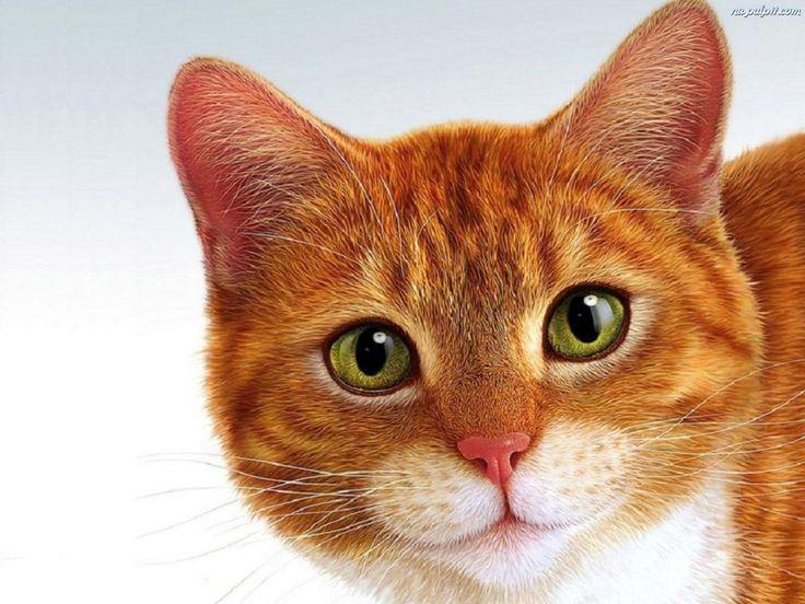 Kot, Piękny, Rudzielec