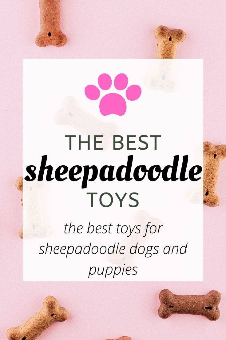 Best Toys For Sheepadoodles Travelling With A Dog In 2020 Sheepadoodle Dog Loss Quotes Sheepadoodle Puppy