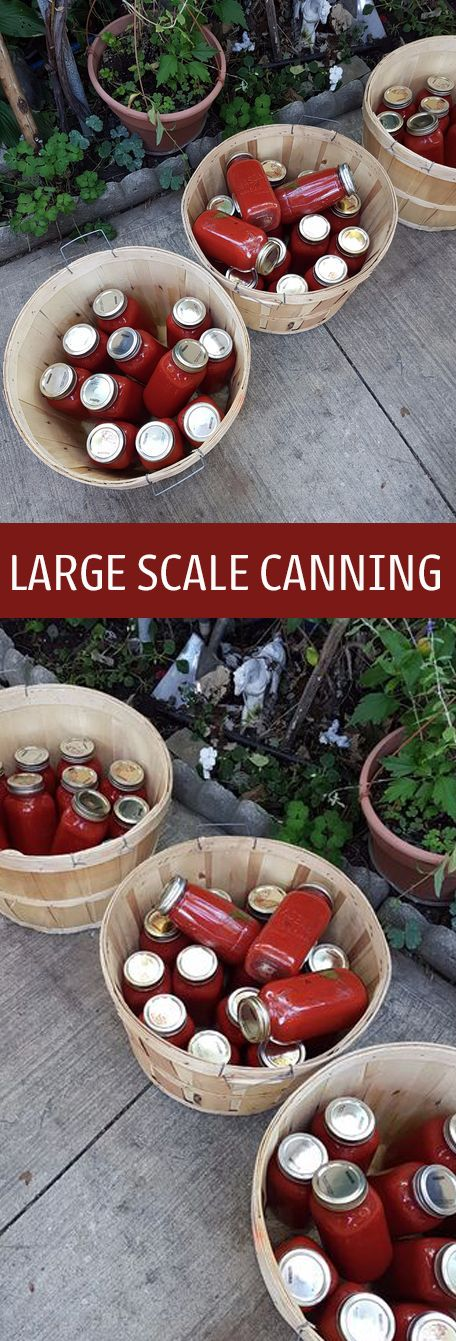 While some of the equipment might seem expensive when you first begin canning on this scale, the price is often worth it in the long run as many materials are used over and over again.