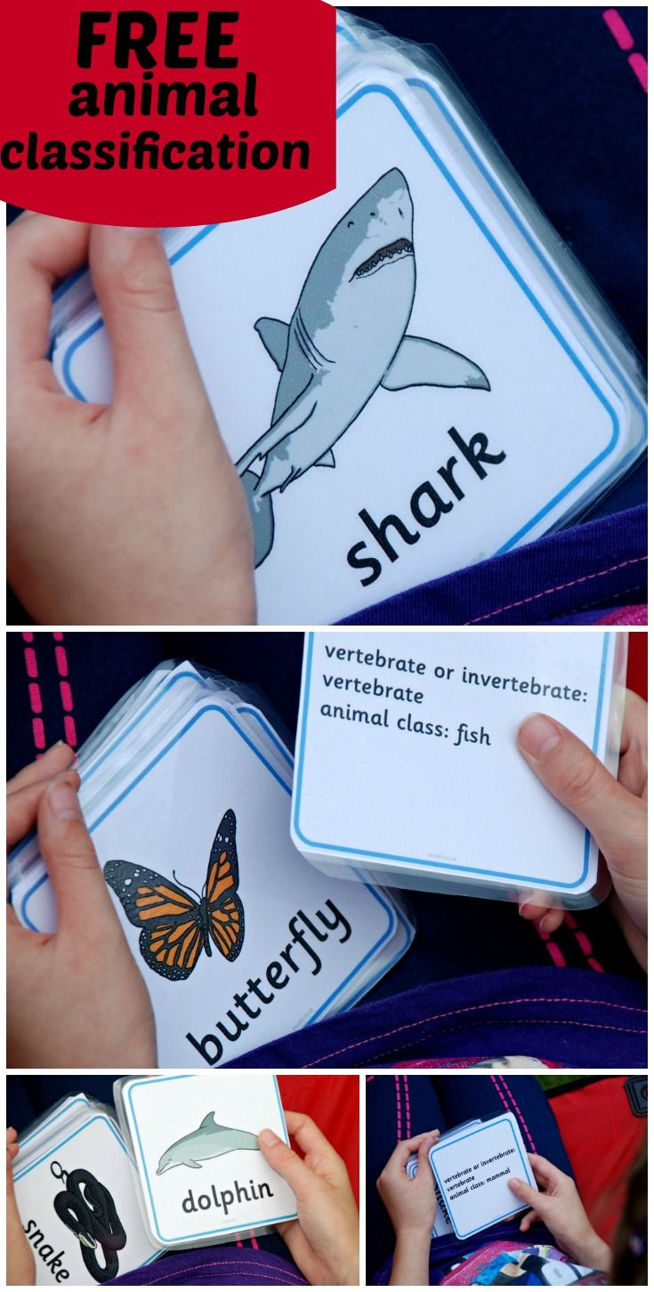 Free animal classification cards includes vertebrate and invertebrate classification