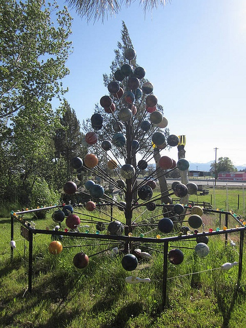 bowling ball tree / photo by frykitty, via Flickr