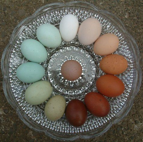 Love the range of egg colors you get from your own chickens with no dyes. My sister has most of these, including some darker olive green but really wants that very dark brown one.