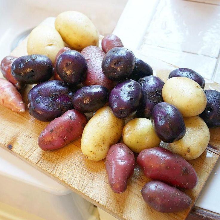 Nyskördad potatis i glada kulörer. Olika sorters potatisknölar du beställa hos oss till våren. #potatis #skörd #potatisknöl #knölar #odling #köksträdgården #svenskträdgård #hemodlat #potatishink #kolonilott #urbangardening #stadsodling #lantliv #hage #wexthuset #potäter #potatoes