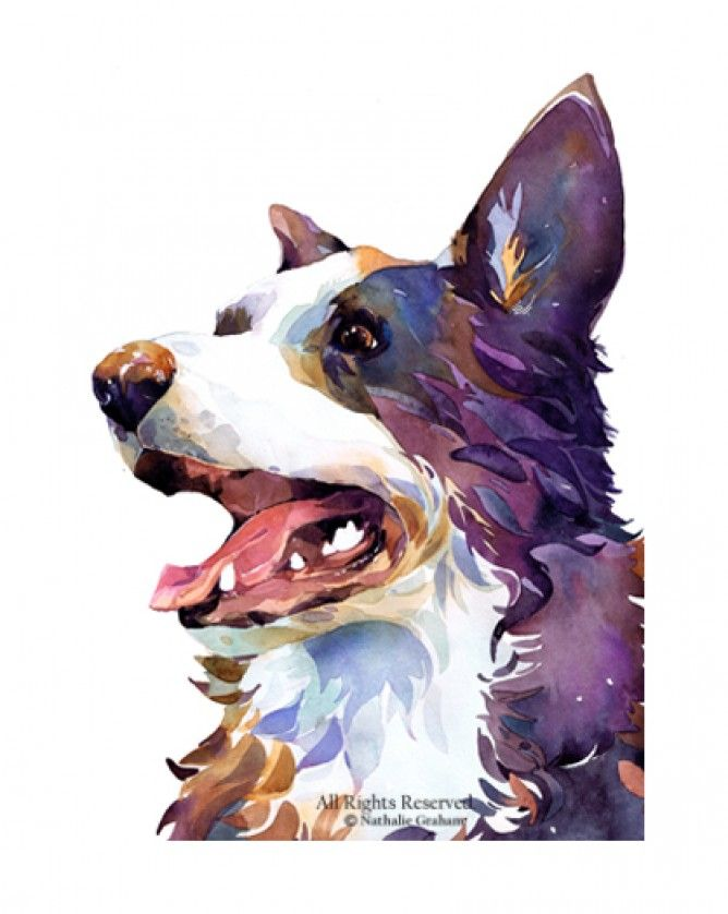 Natalie Graham - Border collie - Artists & Illustrators - Original art for sale direct from the artist