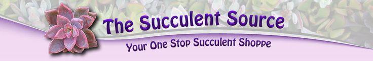 Succulents for sale online source