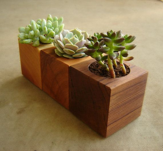Cedar Succulent Pot in Choice of Natural Colors on Etsy, $13.76 CAD