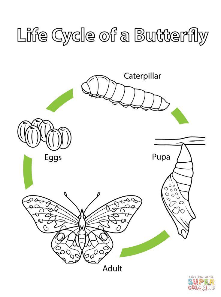 En Fjärils Livscykel Målarbok. Kategorier Fjärilar