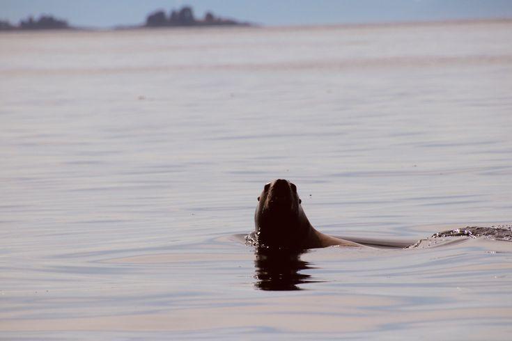 13+ Bering sea animal clinic ideas in 2021