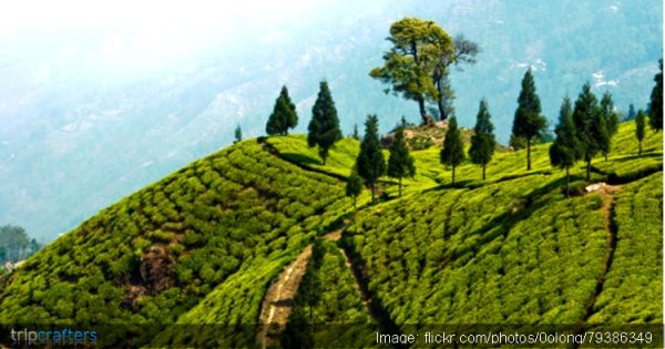 A Himalayan city in the state of West Bengal, Darjeeling is the perfect retreat for those with a penchant for a pleasantly nippy weather. What can be better than walking amidst the plush greenery and unspoiled air unbeknown to the rest of the world? Check out some itineraries for your Darjeeling trip