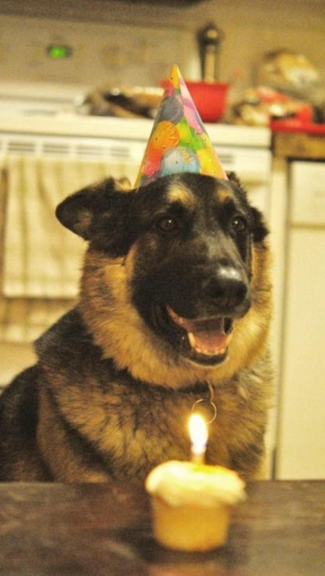 HBday to me | German Shepherds | Pinterest