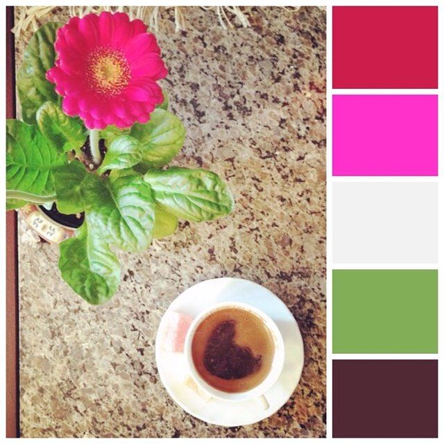 #spring is just around the corner ;) #colour #flowers #pink #mossomcolours #colourscheme #colourpalette