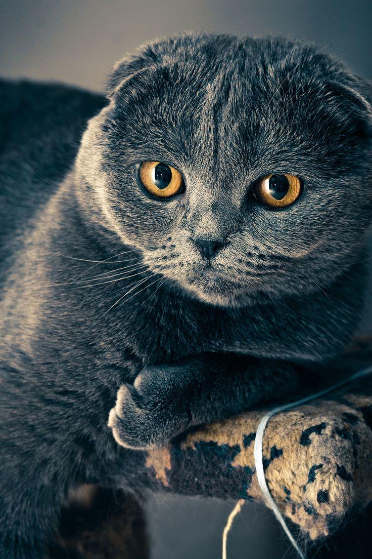 's war mal 'ne Katzenkönigin,Ja, ja!Die hegte edlen Katzensinn,Ja, ja!Verstand gar wohl zu mausen,  http://www.aus-liebe.net/gedichte-ueber-liebe-leben-katzennatur-adelbert-von-chamisso/