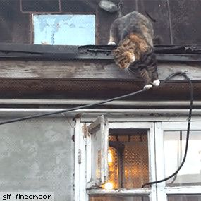 Cat enters window like a boss | Gif Finder – Find and Share funny animated gifs