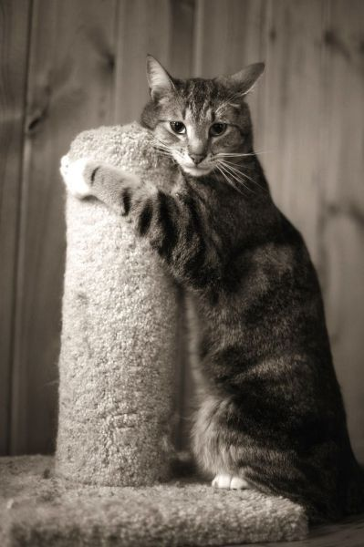Scratching Pole, You Understand Me | Cutest Paw