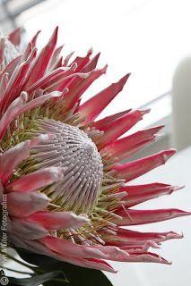 Flores e plantas diferentes