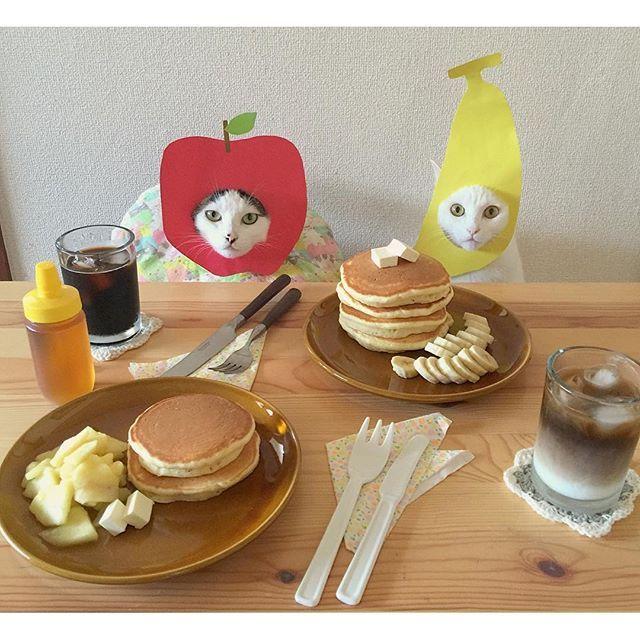 バターじゃないよ。クリチだよ♩ お父はんバナナおこちゃんもバナナ お母はんリンゴハッチャンもリンゴ リンゴは、バターと砂糖でソテー♩ 教えてもらった、白い陶器のカトラリー♡ 金物のカチャカチャ擦れる音せんから快適♩ #ホットケーキ #ホットケーキタワー #八おこめ #ねこ部 #cat #ねこ #八おこめ食べ物