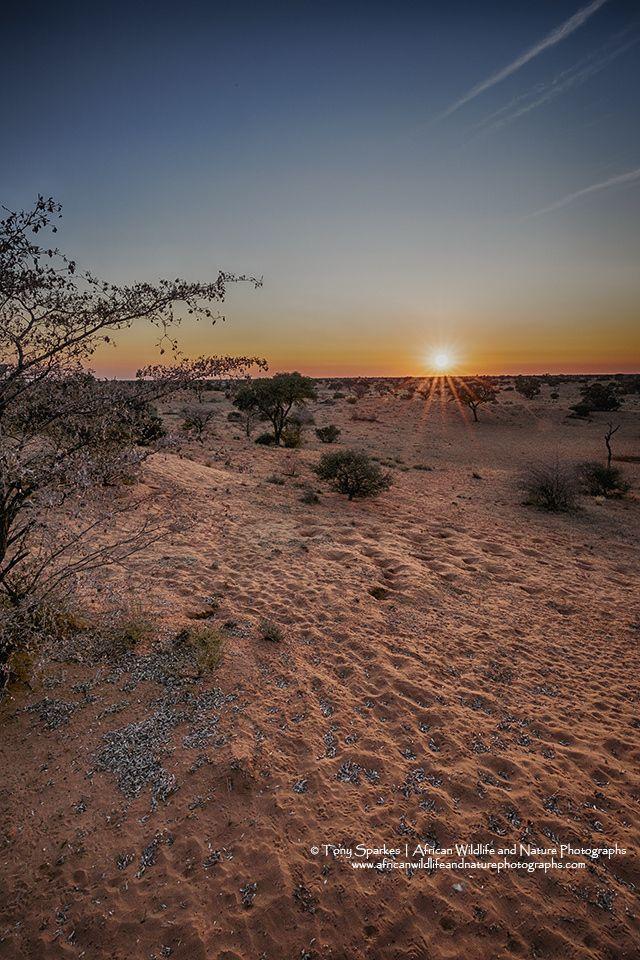 Sunrise in the Kgalagadi Transfrontier Park