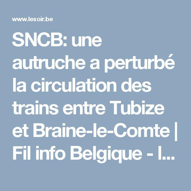 SNCB: une autruche a perturbé la circulation des trains entre Tubize et Braine-le-Comte   Fil info Belgique - lesoir.be