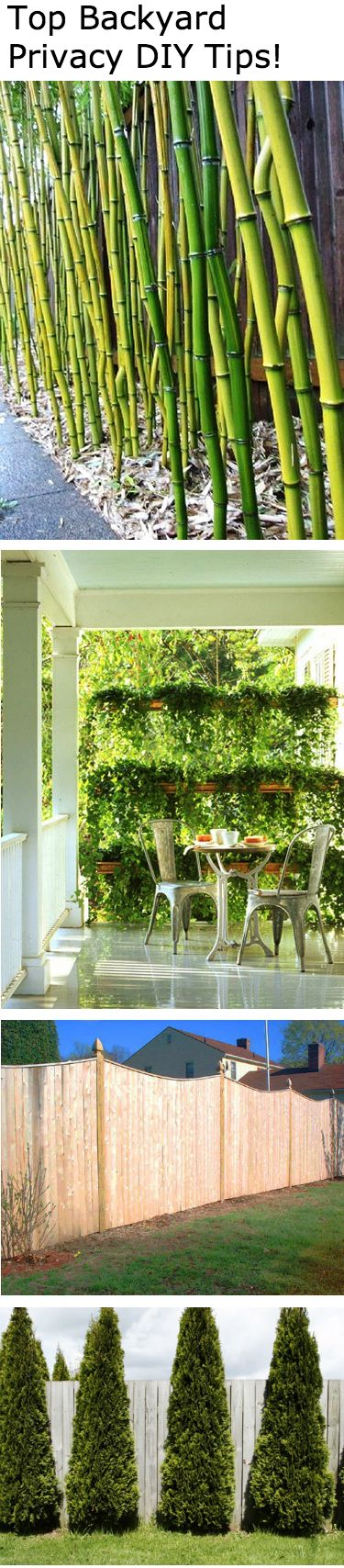 5 Landscaping Ideas to Increase Backyard Privacy #privacy #lanscaping